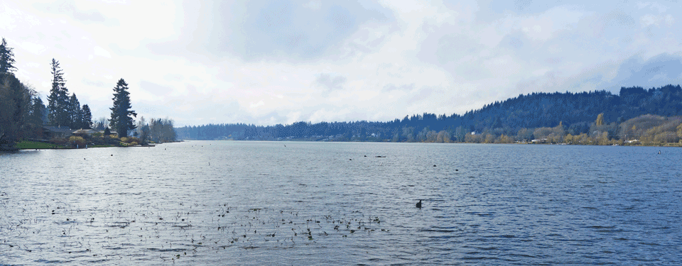 image of Black Lake showing a duck in the foreground and houses along the shoreline